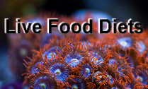 Live Food Diets