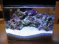 Live Rock Aquarium Live Rock