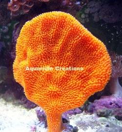 ... Sea Sponge Ocean sponges sea sponges sponges for saltwater aquariums